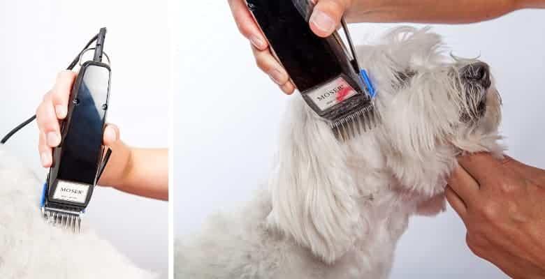 Maquinilla cortapelos para perros barata y con cable - Moser 1400