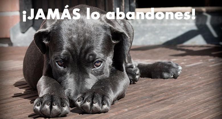No abandones JAMÁS a tu perro