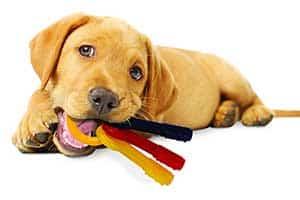 Mordedor para cachorros extrasuave y con forma de llaves - Nylabone