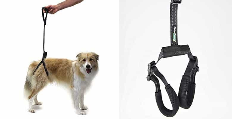 Arnés de cadera para perros con displasia o movilidad reducida - Ortocanis