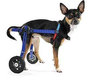 La mejor silla de ruedas para perros del mercado - Ortocanis