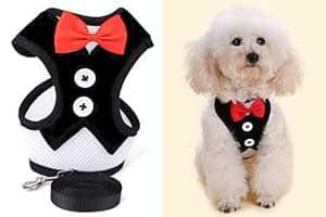 Arnés con diseño especial de traje para perros - PETCUTE