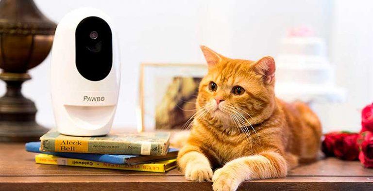 Cámara para gatos y perros con puntero láser integrado - Pawbo+