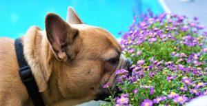 Perfumes y colonias para perros y gatos