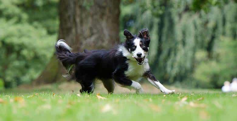Perro corriendo tras tomar vitaminas
