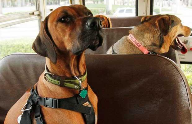 Viajar con perro en bus