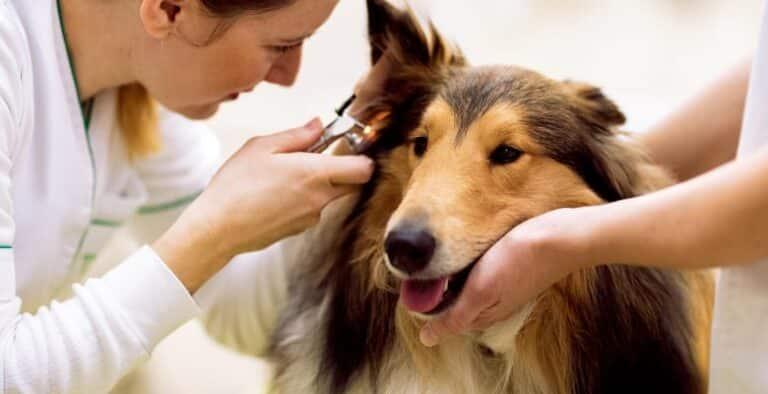 Perros sordos