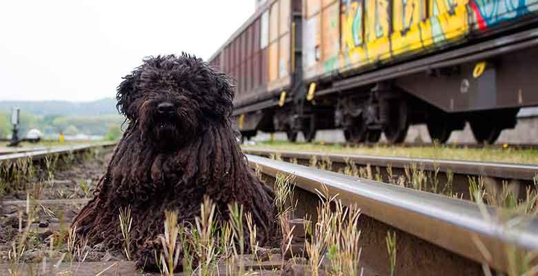 Viajar con perro en el tren