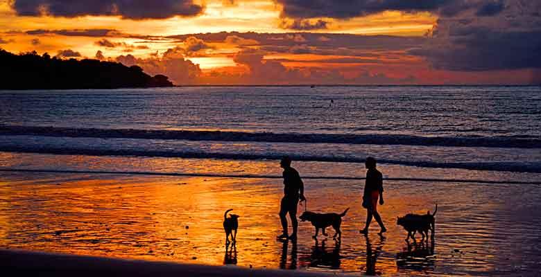 Playas de España que admiten perros en verano