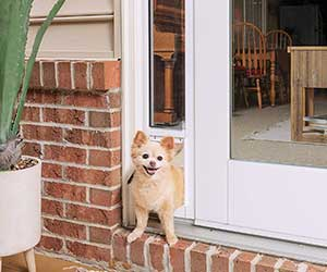 Gatera para puertas de cristal correderas - PetSafe