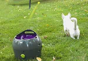 Máquina lanza pelotas para perros automática - Petsafe