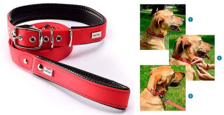 Set de collar y correa para perros - PetTec