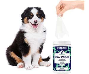 Toallitas especiales para limpiar patas de perros - Petpost