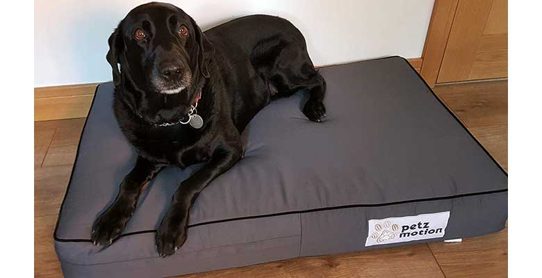 Colchón ortopédico para perros fabricado con espuma viscoelástica - Petzmotion
