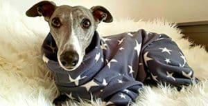 Pijamas para perros
