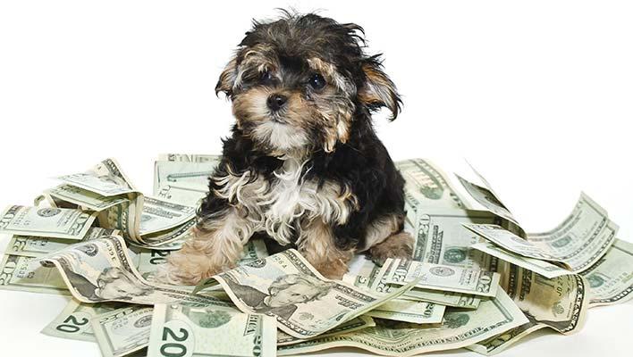 Precio de seguro para perros