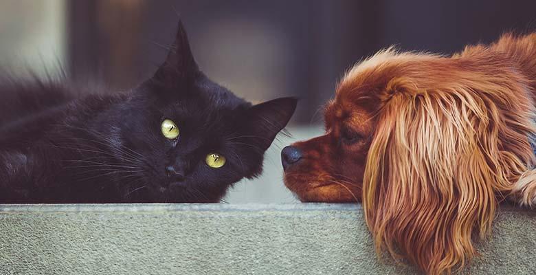 Probióticos para perros y gatos