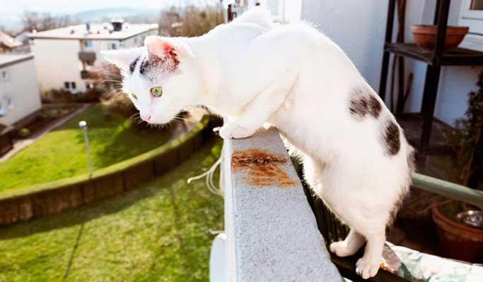 Proteger balcón para evitar caída de gatos