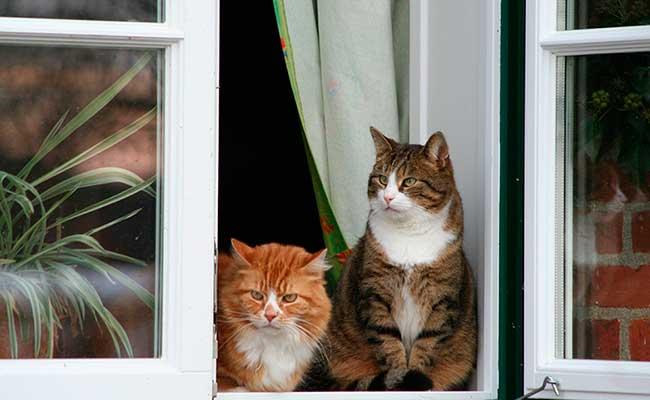 Proteger ventana para evitar caída de gatos