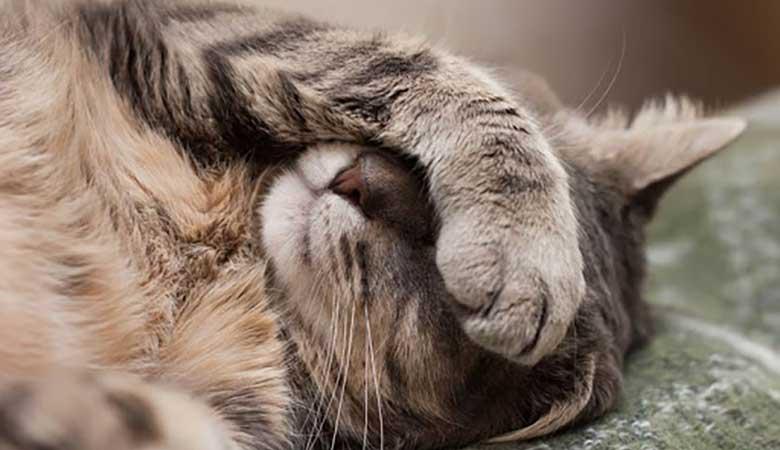 Quitar olor a gato