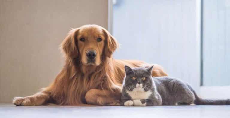 Quitar olor a perro y gato
