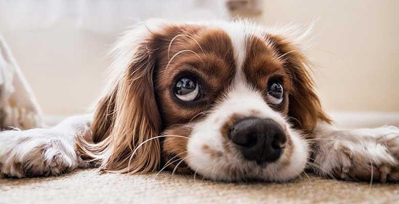 Quitar olor a perro