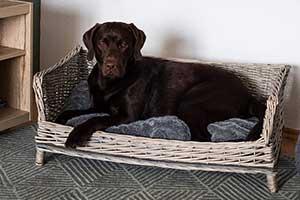 Sofá de mimbre para perros - RM E-Commerce