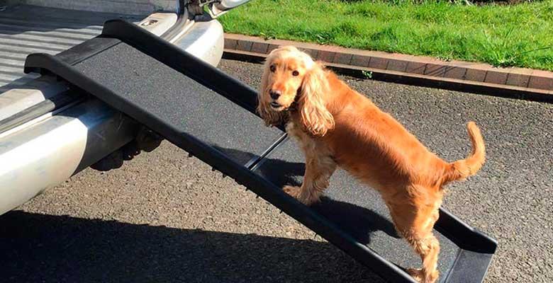 Rampas y escaleras para perros