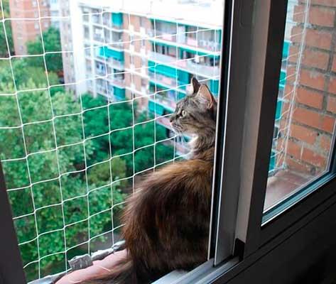 Redes para gatos - cómo proteger a tu gato de una caída desde la ventana