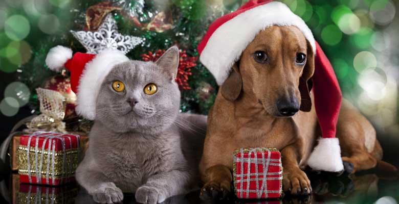 Regalos para amantes de los gatos y perros