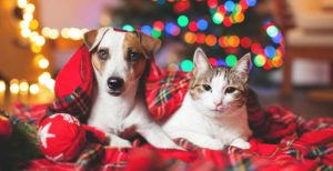 Regalos para perros y gatos