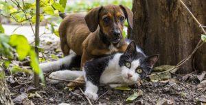 Repelentes para gatos y perros