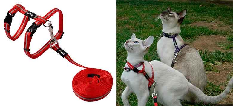 Correa y arnés reflectantes para gatos - Rogz Catz