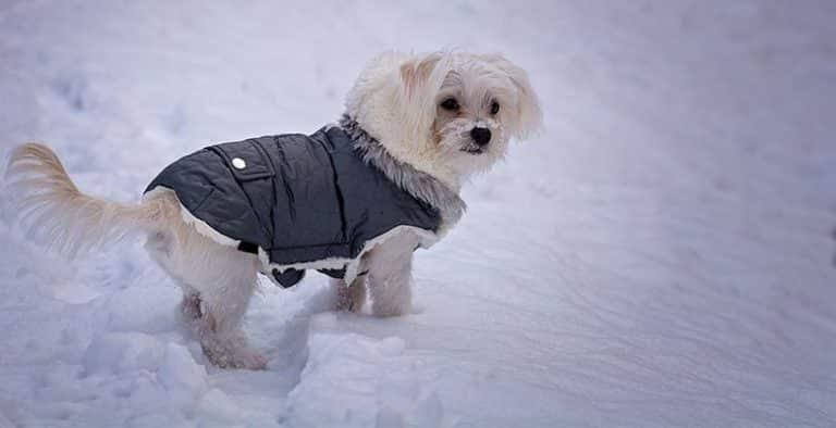 Ropa y abrigos para perros