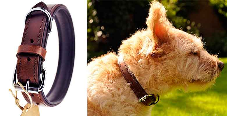 Collar de cuero para perros - Schnüffelfreunde