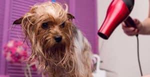 Secadoras de pelo para perros