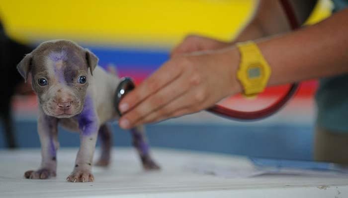 Seguro veterinario para perros