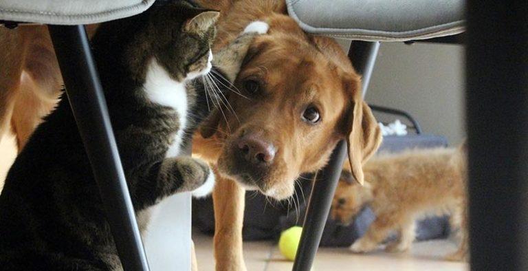 Seguros para mascotas (perros y gatos)