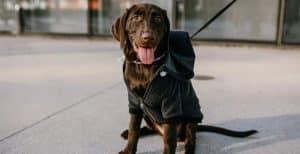 Sudaderas y jerseys para perros