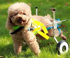 Silla de ruedas para perros barata - Teabelle
