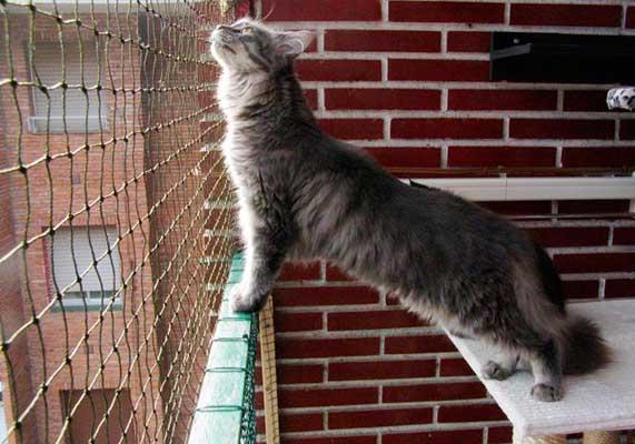 Cómo Proteger A Tu Gato De Caídas Por Ventana Balcón O Terraza