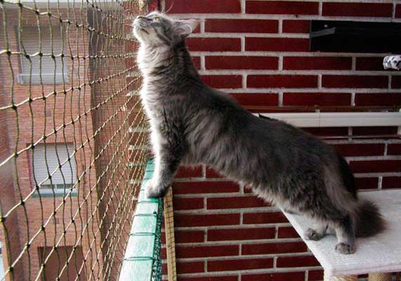 Proteger terraza o balcón con una red de seguridad para gatos