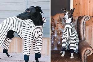 Pijama para galgos y otros lebreles - The Trendy Whippet