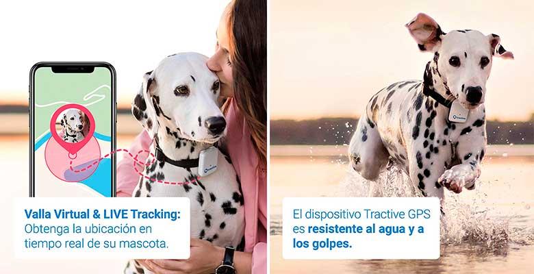 El localizador GPS para perros y gatos más popular - Tractive GPS