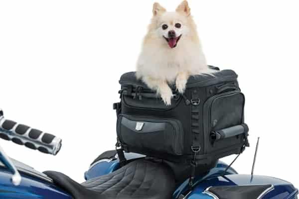Transportín para llevar al perro en moto