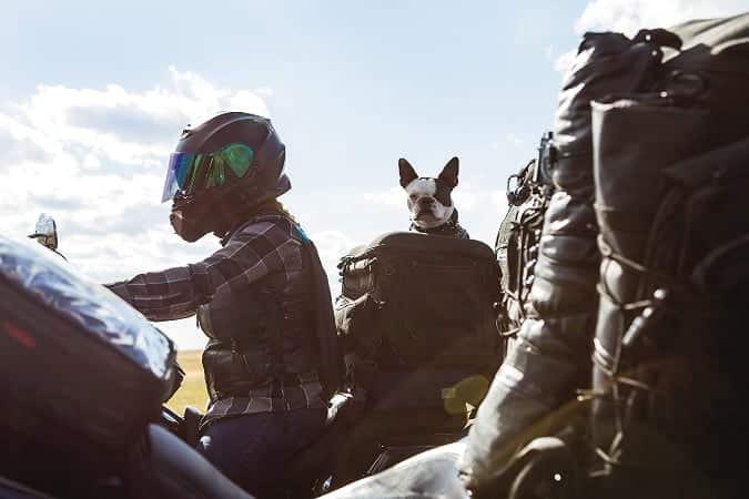 Viajar en moto con perro