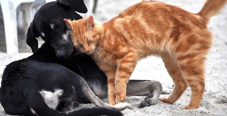 Vitaminas para perros y gatos