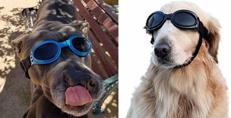 Gafas de sol para perros grandes y medianos - Vivi Bear