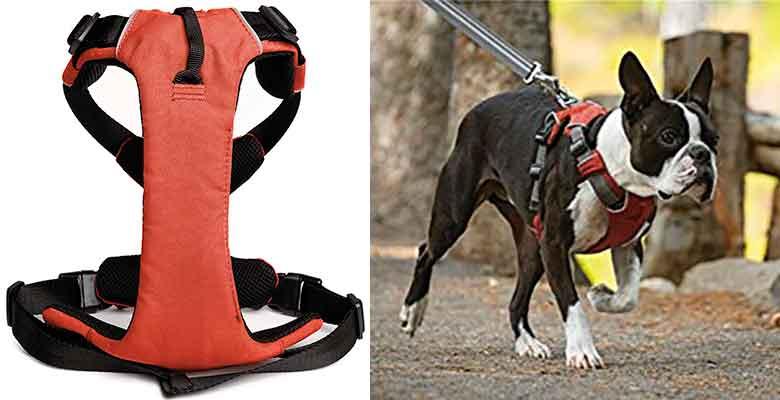Arnés acolchado para perros - Vivo-NoPull