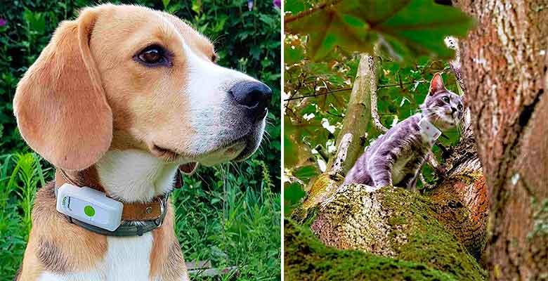 Localizador GPS para perros y gatos con función llamada - Weenect Dogs & Cats